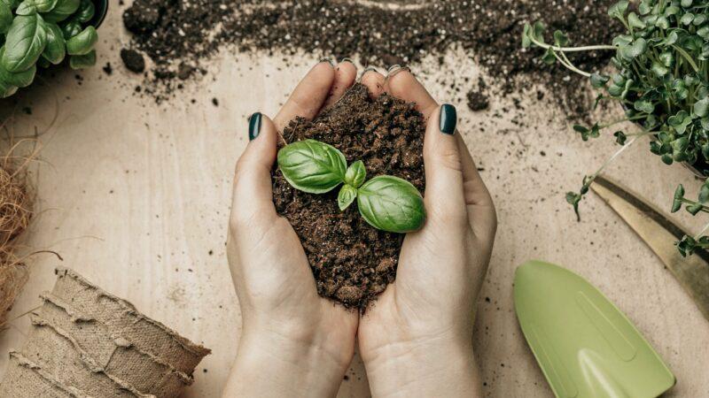 Plantando futuro
